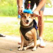 1 - Trevor's 10th Birthday Party!